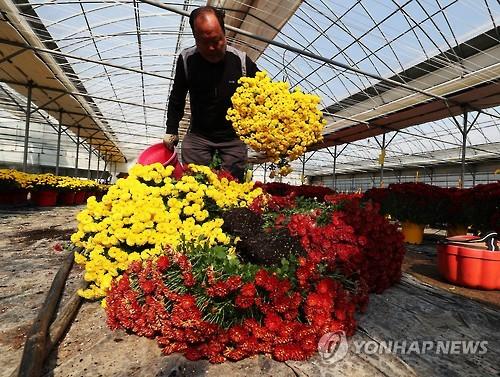 Anti-graft law hits flower sales hard