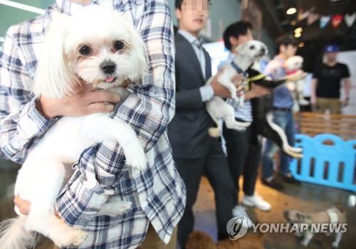 (News Focus) S. Korean municipalities jumping into pet industry