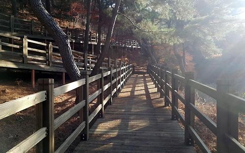 평창강 따라 1㎞ 구간 소나무숲 길 조성