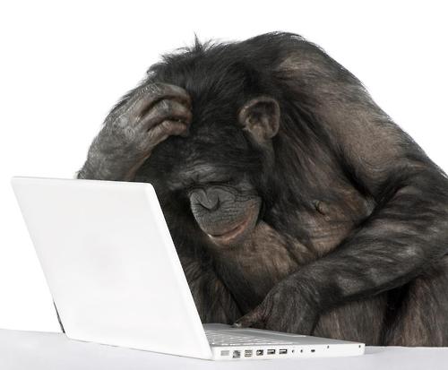 """""""원숭이도 자기 기억이 어느 정도인지 안다"""""""
