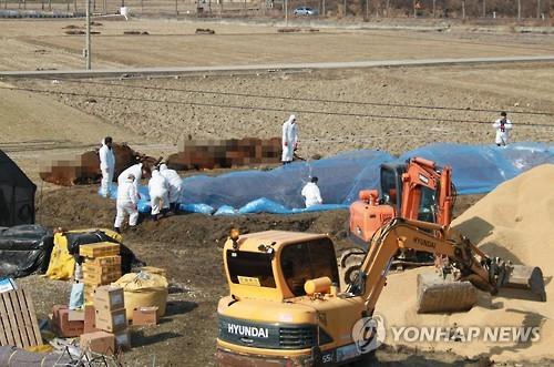 전북 AI·구제역 가축 매몰지…지하수 '안전'
