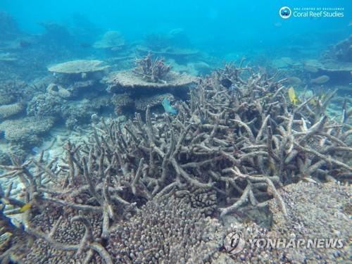 호주 대산호초, 소멸 위기…기후변화에 무방비