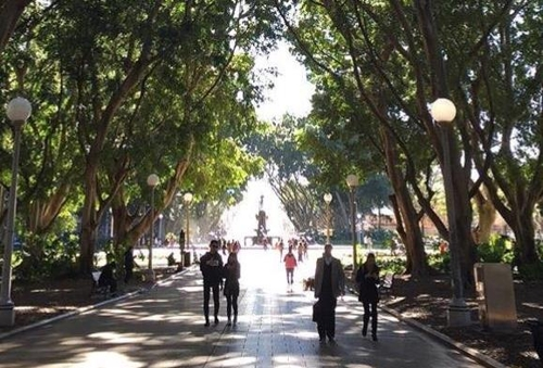 거리·공원 활보하는 쥐 어쩌나…시드니 관광산업 타격 우려