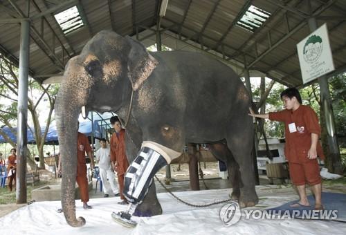 세계 첫 '코끼리 병원' 극적 회생…폐업위기에 성금 답지
