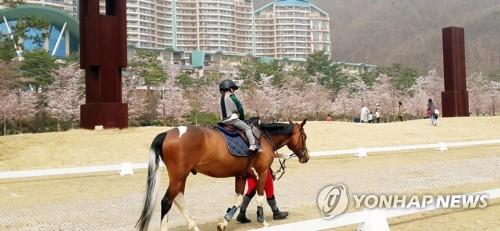 홍천 비발디파크, 4월 '벚꽃축제'