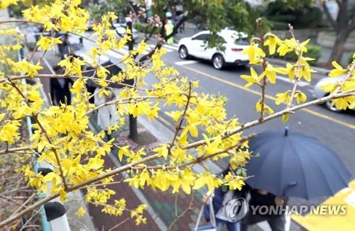"""'추적추적' 봄비 내리는 전북…""""일교차 커"""""""