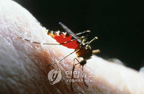 [이희용의 글로벌시대] 말라리아 '강 건너 불' 아니다