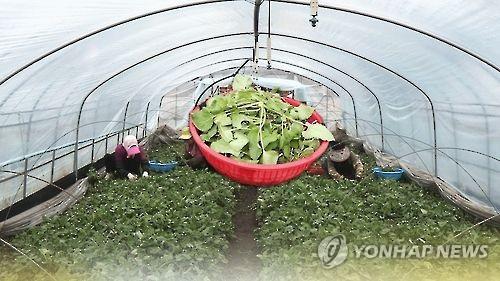 펜션서 '박쥐취' 먹고 구토증세…13명 병원행
