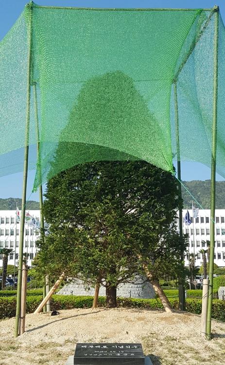 시들시들 홍준표 '채무제로 나무' 또 교체…세 번째 심어