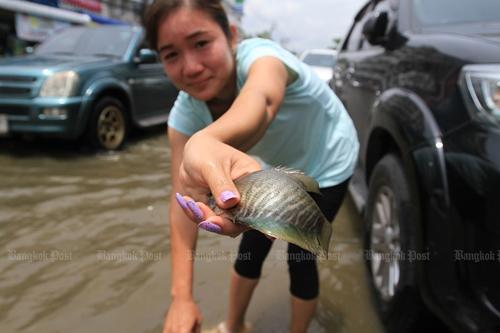 '물바다 된 도로서 물고기잡이' 태국 방콕 인근 폭우로 '몸살'