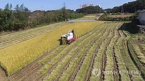 쌀값 하락에 벼 재배 줄었다…밭작물로 전환
