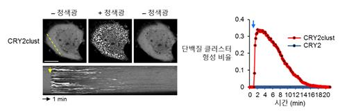 국내서 '단백질 군집 형성 신기술' 개발…기존보다 10배 빨라