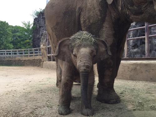 서울대공원 아기코끼리 '희망이' 돌잔치…과일 케이크 선물