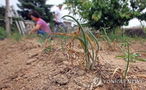 '장마라도 빨리 와라'…경기도 가뭄·폭염 피해 확산
