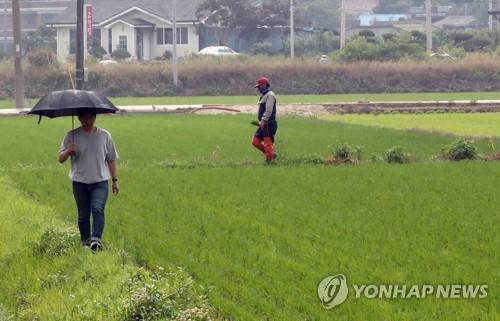 함평 시간당 50mm 폭우…'가뭄 심각' 서남부 찔끔(종합)