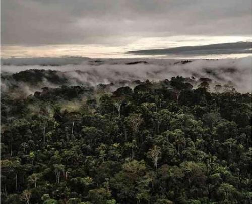 브라질, 아마존 열대우림 환경보호구역 축소 문제로 논란