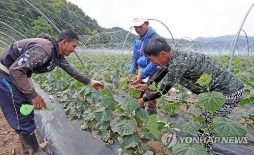 화천 외국인 계절근로자 추가 입국…농가 인력난 대안 관심