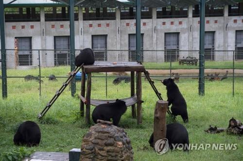 베트남 못말리는 몸보신문화에…곰 1천마리 구하기 프로젝트