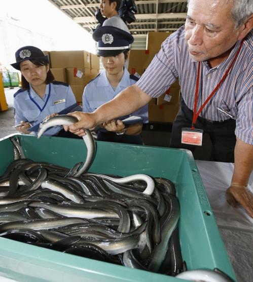 일본서 여름보양식 뱀장어 대신 메기·붕장어 인기