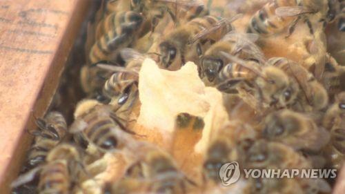 전북 진안서 산행 중 벌에 쏘인 50대 사망