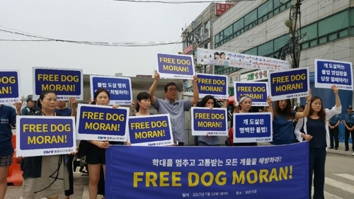 """동물권단체 케어 """"학대로 고통받는 모든 개를 해방하라"""""""