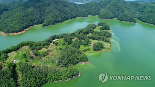 장마·폭염 여파로 대청호 녹조 확산 조짐 '비상'