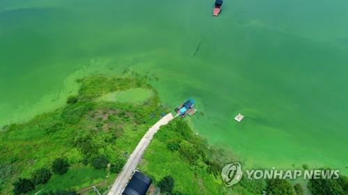 대청호 녹조 비상…회남수역 조류경보 '관심단계' 발령