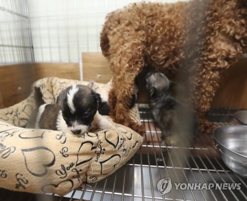계곡 '비닐봉지 투기' 젖먹이 강아지 세마리 새주인 찾았다