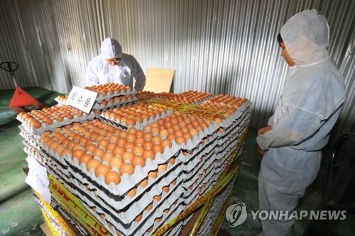 충북 29개 산란계 농장 추가 검사…내일 결과 발표