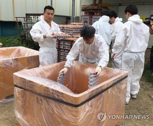 살충제 성분 신속 배출…산란계 농장 '닭 다이어트' 나서