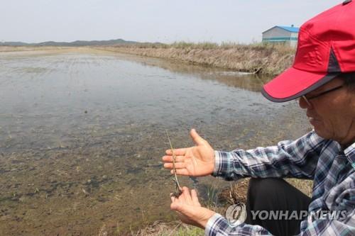 서산·태안 봄가뭄 재해보험금 지급액 120억원…역대 최대