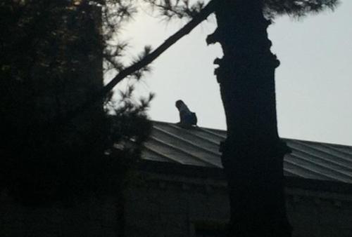 고대 건물 지붕서 중국인 4시간 소동…남학생에 교제 요구(종합)