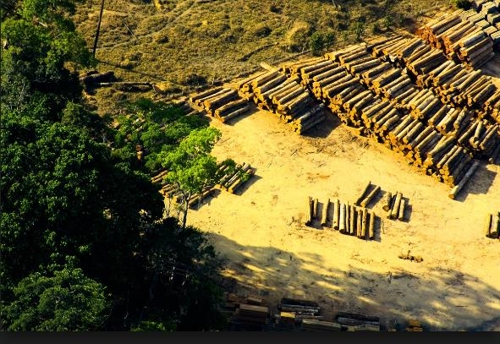 '지구의 허파' 아마존 열대우림 파괴 3년 만에 감소세