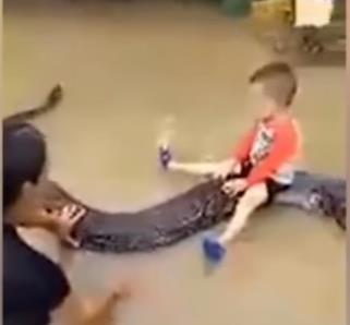 길이 6m 비단뱀이 아이와 노는 애완동물?…베트남 가정에 벌금
