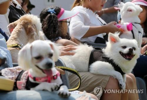 '모여라! 멍멍'…속초 반려견 문화축제 개최