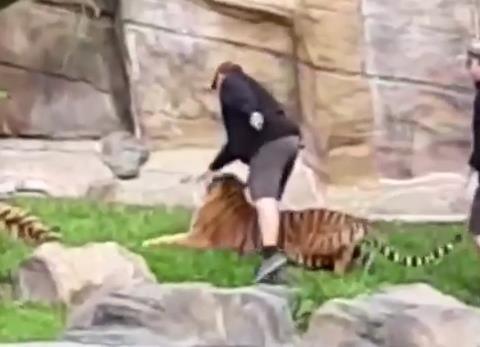 머리 얻어맞는 호랑이·귀 잘린 코알라…호주 동물들 수난