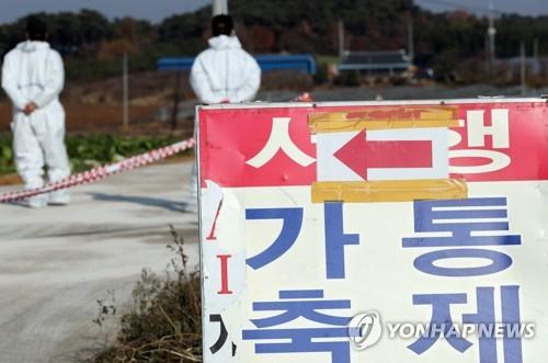 '또 찾아온 불청객 AI'…전국 방역 비상, 순천만도 폐쇄 검토