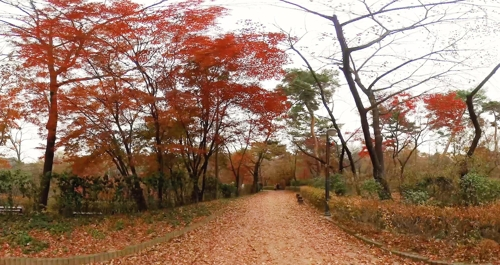 [VR현장] 낙엽이 벌써 땅바닥에 수북…잡고 싶은 가을 끝자락