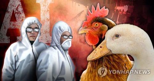 """닭·오리 저승사자 H5N6형 AI """"인체감염 우려는…""""(종합)"""