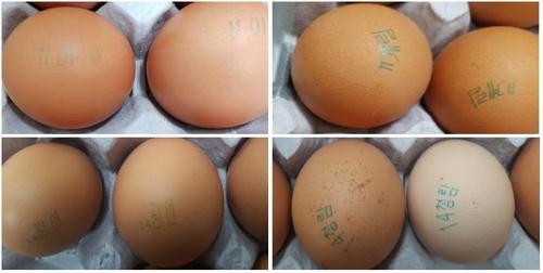 충남·경북 등 4개 농가 계란서 살충제 성분 검출