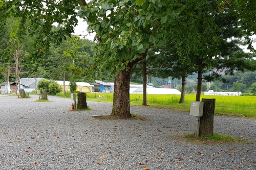 폐교 빌려 무허가 건물 짓고 아름드리 나무 멋대로 벌목