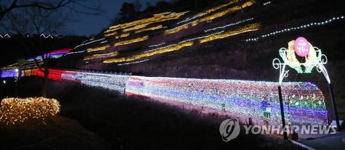 [카메라뉴스] 겨울밤 보성 녹차밭 수..