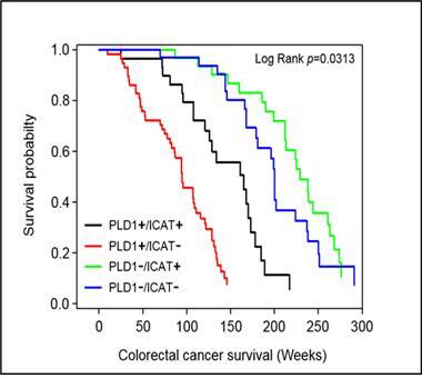 다양한 대장암 발병 신호전달 동시 억제 물질 규명