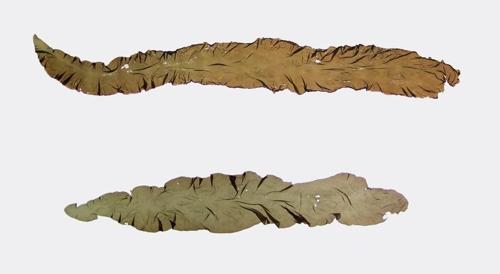 수산과학원 국산 방사무늬김 일본산과 구분 기술 개발