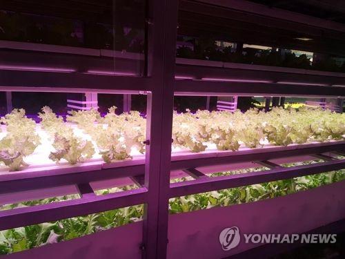 경기도, '식물공장'으로 도시노인 일자리 창출