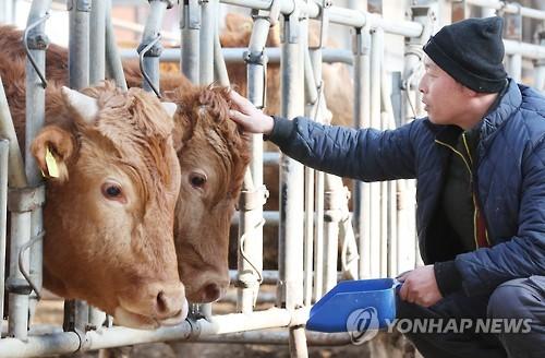경기도, 올해 축산 경쟁력 강화에 1천264억 쓴다