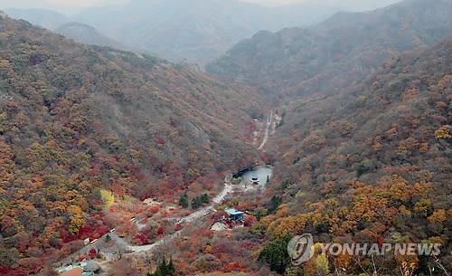 """""""내장산 단풍생태공원서 무료 야외결혼식 하세요"""""""