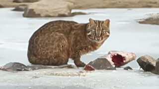 삵은 잉어사냥…천수만 희귀동물들의 하루