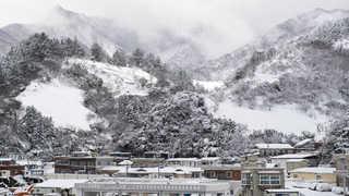 쉴 새 없이 눈 펑펑…울릉도 75cm 눈폭탄