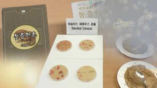동충하초 제품서 식중독균…기준치 800배↑ 검출